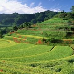 孔祥斌:我国耕地开发利用已经达到生态极限