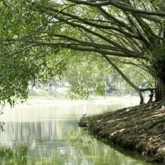 国家林业局:城乡绿化禁止使用违法采挖的大树古树