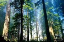 人造光污染危害热带雨林