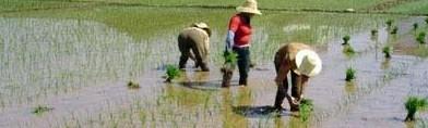 长株潭探索污染耕地治理有效路径