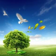 聚焦新环保法:全民环保从自觉自愿到法律义务