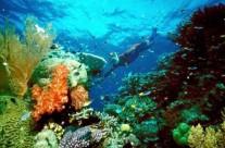 大堡礁前景堪忧 或入濒危遗产名录