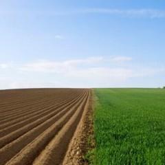 我国首次将耕地分等定级 耕地退化面积超四成