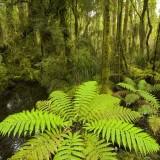 热带雨林救不了地球 研究显示碳肥效应或未发生